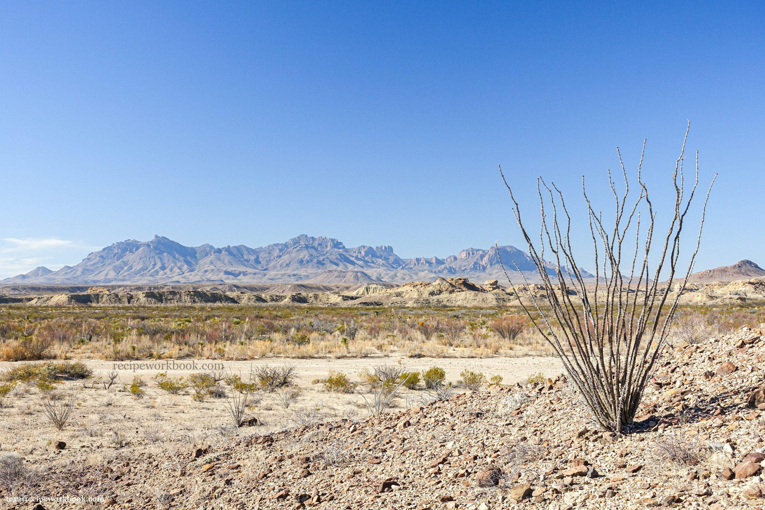 Ocotillo from Nine Point Draw, looking up at the Chisos Mountains in Big Bend.